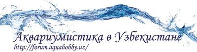 Форум аквариумистов Узбекистана. - uz.JPG