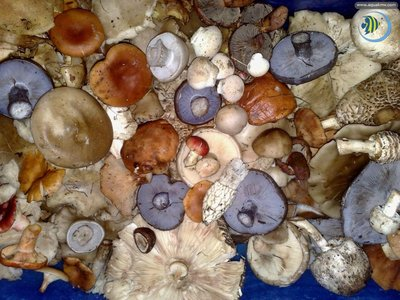 Грибы грибочки ..... - 0_bb126_cb6768c9_orig.jpg